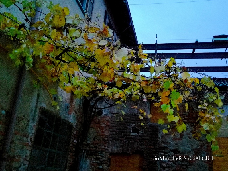 20191123_Sommelier Social Club, Nerviano, Milano